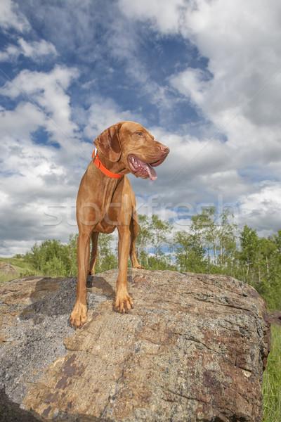 счастливым собака улице Top рок Сток-фото © Quasarphoto