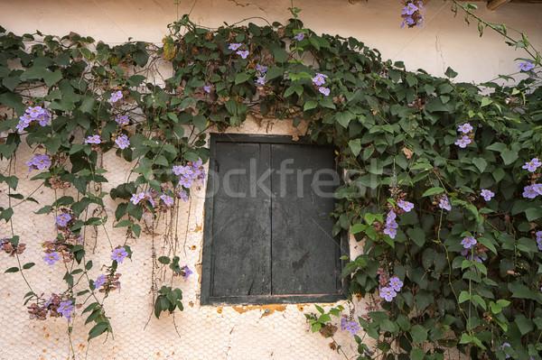 Rustik pencere çiçek etrafında Kolombiya büyüyen Stok fotoğraf © Quasarphoto