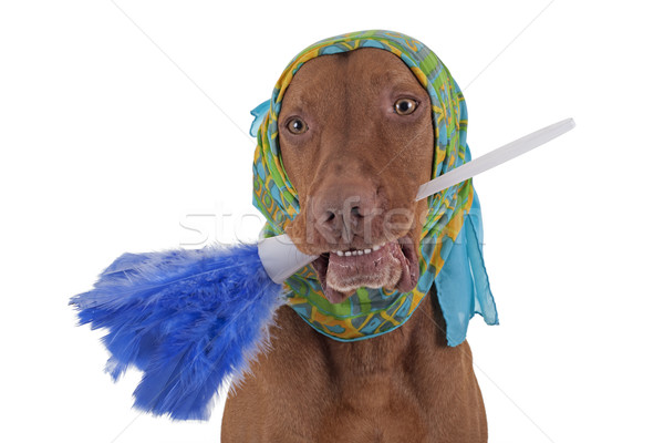 janitor dog Stock photo © Quasarphoto