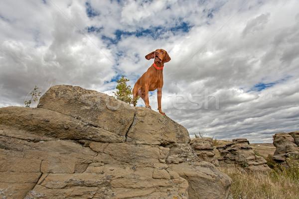 Macera köpek ayakta üst uçurum bulutlu Stok fotoğraf © Quasarphoto