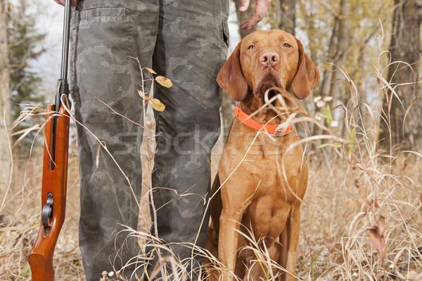 Jachthond hiel vergadering buitenshuis hond huisdier Stockfoto © Quasarphoto