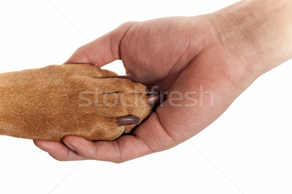dog paw in human hand Stock photo © Quasarphoto