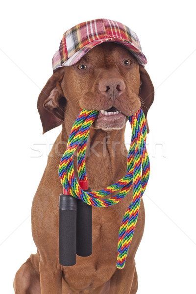 Hazır köpek renkli beysbol şapka Stok fotoğraf © Quasarphoto
