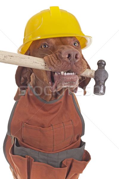 El ulağı köpek önlük kask çekiç Stok fotoğraf © Quasarphoto