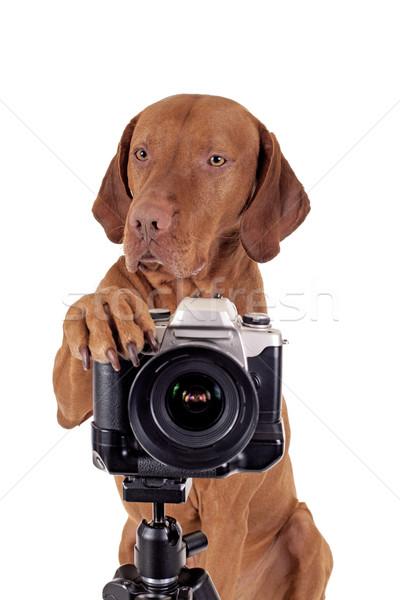 Köpek fotoğrafçı pençe altın renk Stok fotoğraf © Quasarphoto
