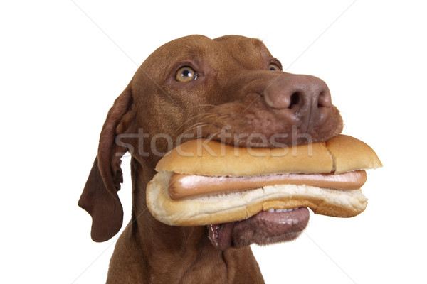 Tentation réel hot dog chiens bouche blanche Photo stock © Quasarphoto