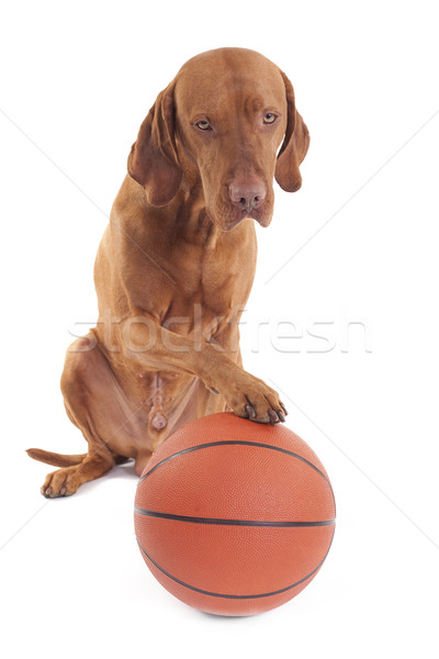 sporting dog Stock photo © Quasarphoto