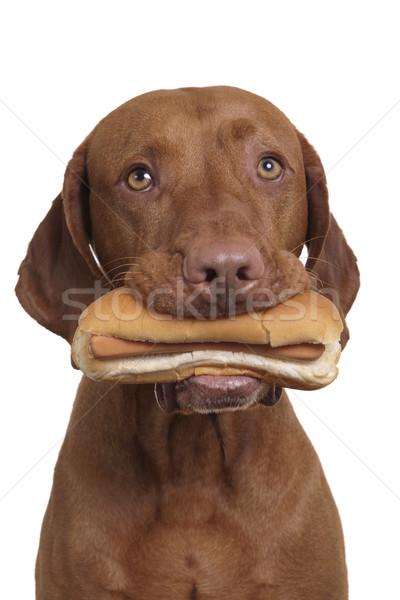 ホットドッグ 口 犬 本当の 白 ストックフォト © Quasarphoto