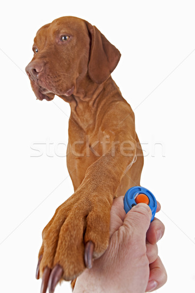 dog training with positive reinforcement Stock photo © Quasarphoto