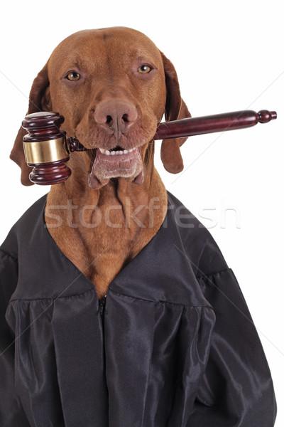 Hasta yargıç köpek elbise Stok fotoğraf © Quasarphoto