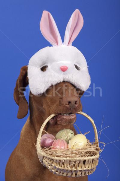 собака Пасху корзины кролик Сток-фото © Quasarphoto