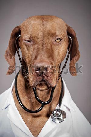 Köpek yürüyüş kamera beyaz Stok fotoğraf © Quasarphoto