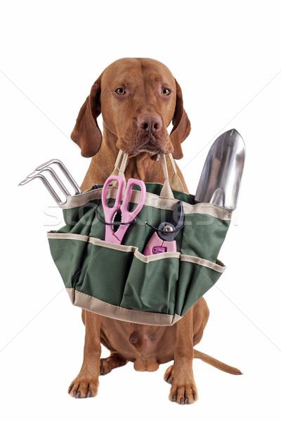 Stock fotó: Segítség · kertészkedés · aranyos · kutya · tart · táska