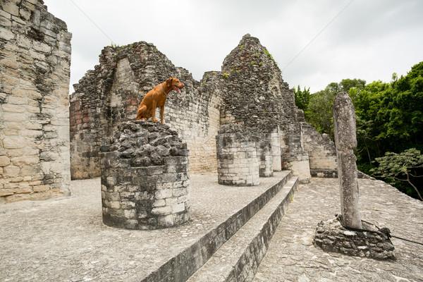 Köpek eski seyahat renk piramit Stok fotoğraf © Quasarphoto