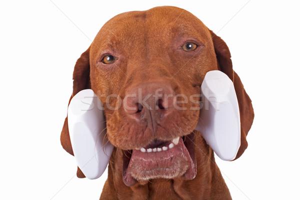 Köpek ağız beyaz Stok fotoğraf © Quasarphoto
