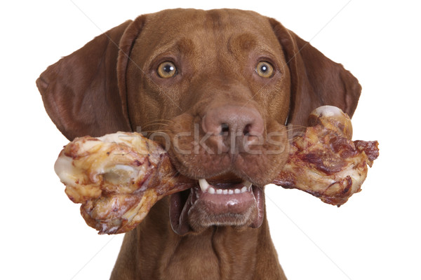 Köpek doğal kemik ağız beyaz Stok fotoğraf © Quasarphoto