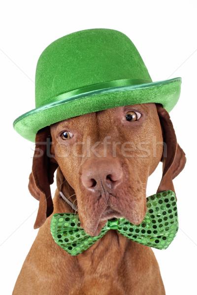Foto stock: Irlandés · día · puro · raza · perro