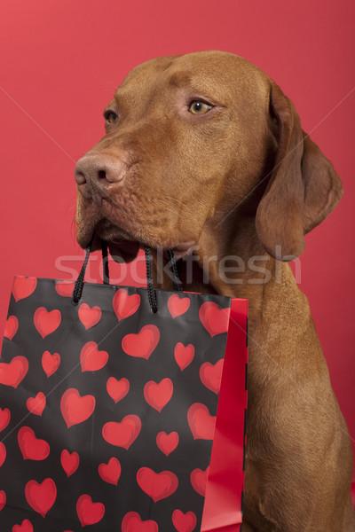 Köpek valentine sevgililer günü Stok fotoğraf © Quasarphoto