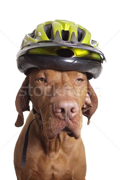 Köpek güvenlik bisiklet kask beyaz Stok fotoğraf © Quasarphoto