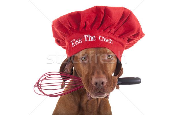 Csók szakács merő fajta kutya piros Stock fotó © Quasarphoto