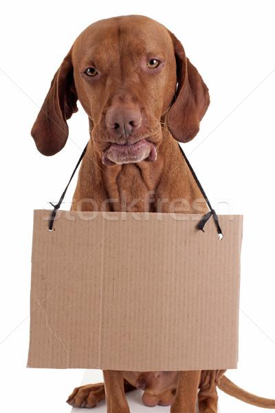 Köpek karton imzalamak komik altın renk Stok fotoğraf © Quasarphoto