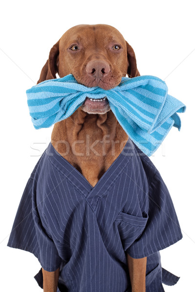 I can help you cleaning Stock photo © Quasarphoto