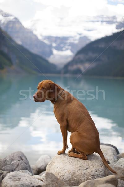 Köpek dağ göl oturma Stok fotoğraf © Quasarphoto