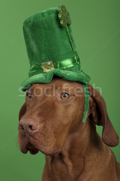 Dog with St.Patrick's Day hat  Stock photo © Quasarphoto