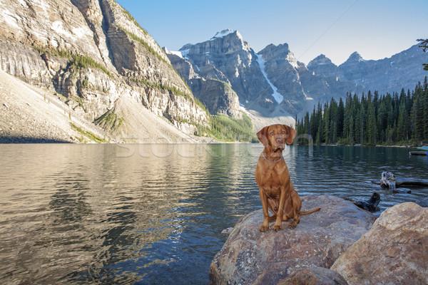 Chien séance Rock glacier lac chien de chasse Photo stock © Quasarphoto