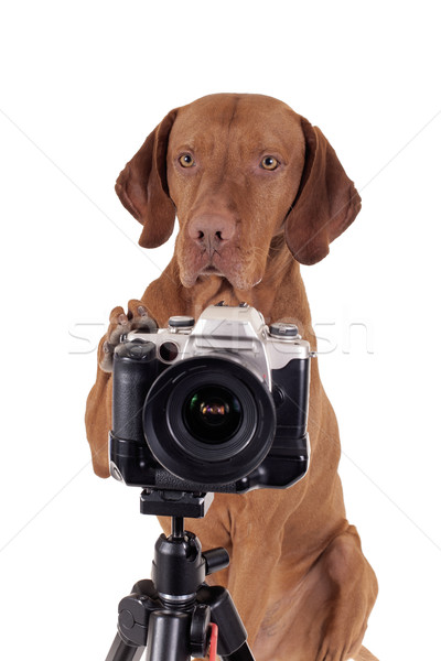Fordul elvesz képek kút képzett kutya Stock fotó © Quasarphoto