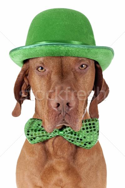 Dzień psa zielone muszka hat odizolowany Zdjęcia stock © Quasarphoto