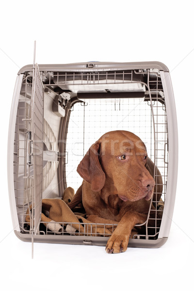 dog laying in crate  Stock photo © Quasarphoto