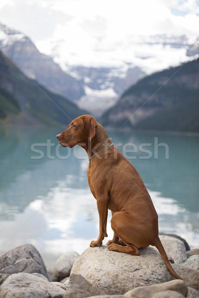 Göstermek köpek oturma Stok fotoğraf © Quasarphoto