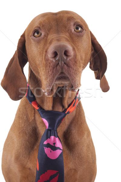 любящий собака глазах шее Сток-фото © Quasarphoto