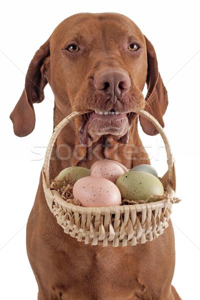 Kutya kosárnyi tojás aranyos tart száj kosár Stock fotó © Quasarphoto