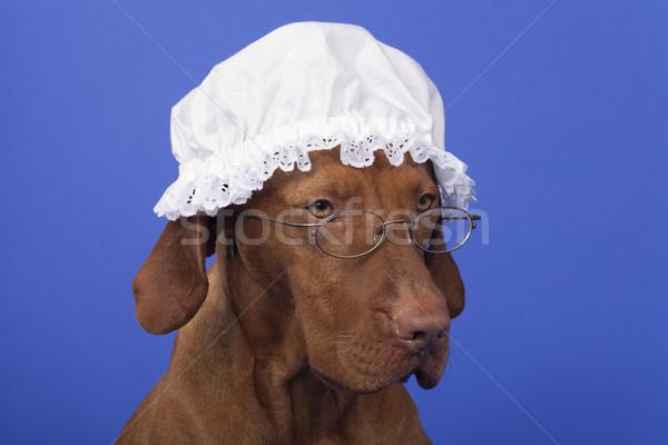 Köpek büyükanne gece kapak gözlük mavi Stok fotoğraf © Quasarphoto