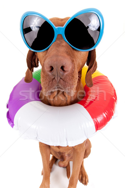 лет собака плаванию Сток-фото © Quasarphoto