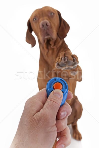Köpek itaat eğitim insan eli pençe Stok fotoğraf © Quasarphoto
