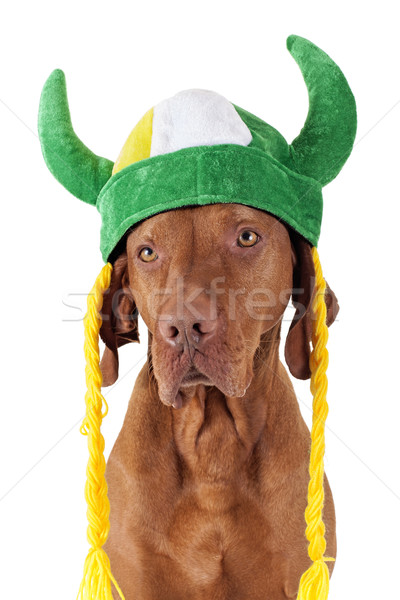 dog with viking hat Stock photo © Quasarphoto