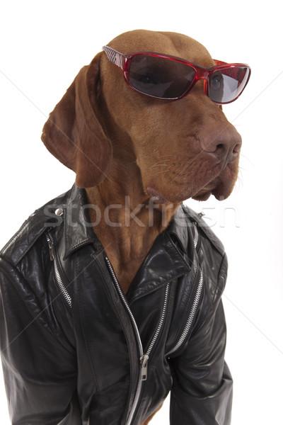 собака Солнцезащитные очки Сток-фото © Quasarphoto
