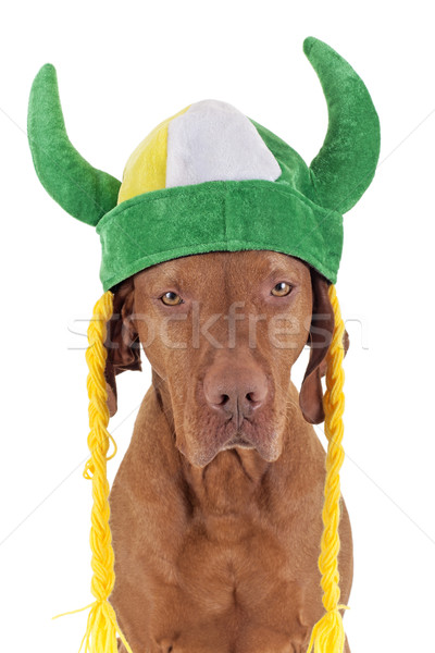 Irish warrior dog Stock photo © Quasarphoto