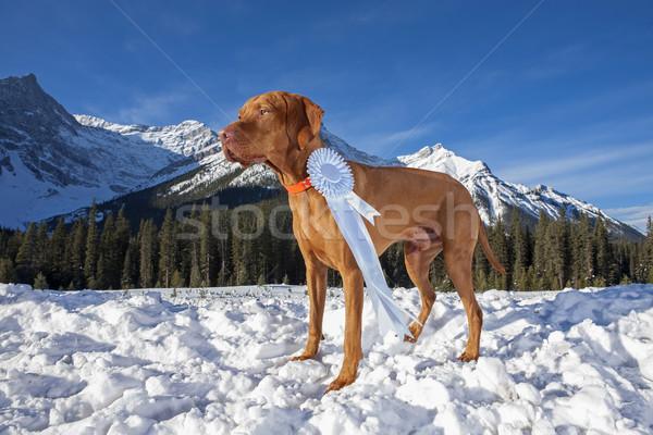 Köpek kazananlar göstermek açık havada Stok fotoğraf © Quasarphoto