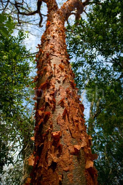 Egzotik orman orman kırmızı renk Stok fotoğraf © Quasarphoto