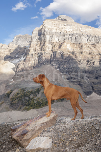 犬 高山 ハイキング 山 ストックフォト © Quasarphoto