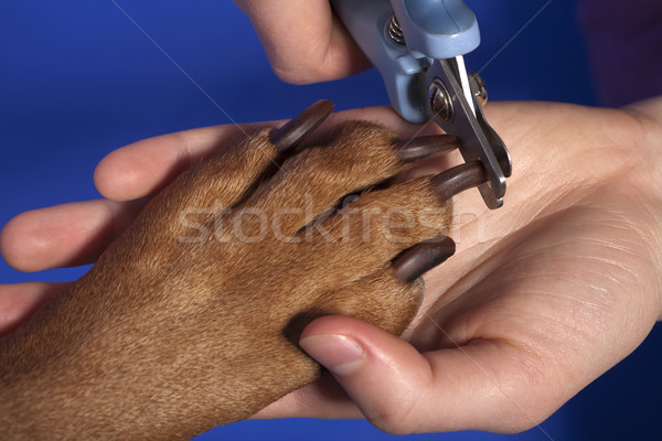 cutting dog nail  Stock photo © Quasarphoto