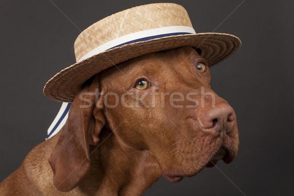 Köpek hasır şapka portre karanlık kafa köpek yavrusu Stok fotoğraf © Quasarphoto