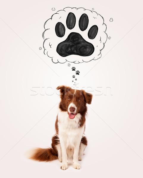 Cute border collie poot boven hoofd bruin Stockfoto © ra2studio