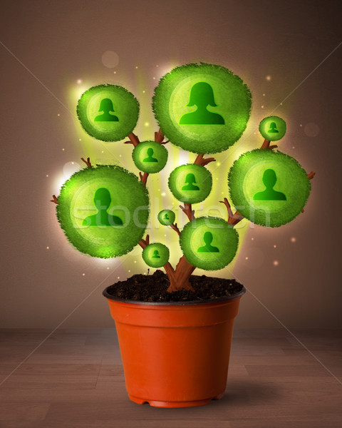 Social network tree coming out of flowerpot Stock photo © ra2studio