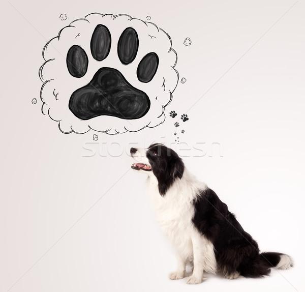 Bonitinho border collie pata acima cabeça preto e branco Foto stock © ra2studio