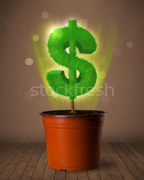 Dolar işareti ağaç dışarı saksı doğa Stok fotoğraf © ra2studio